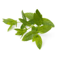 Spearmint leaf